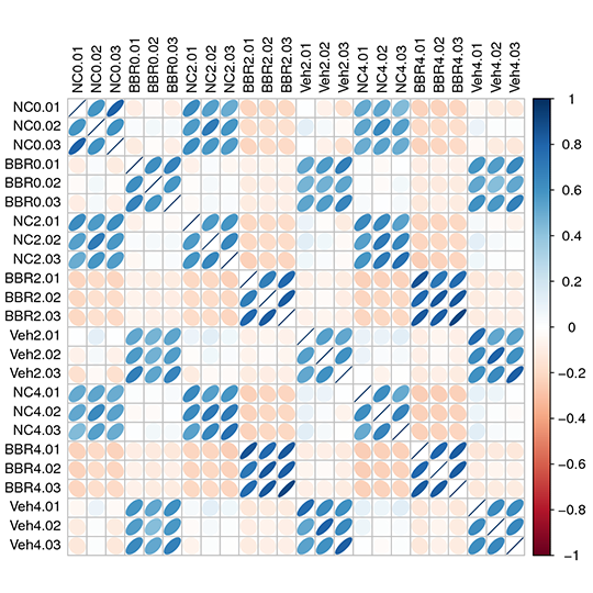 Novogene Metagenomic Heatmap for the Relation Among Samples