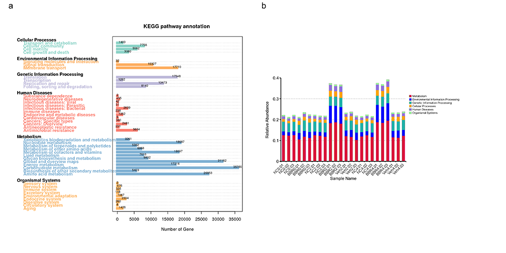 Novogene Metagenomic Kyoto Encyclopedia of Genes and Genomes (KEGG) Annotation