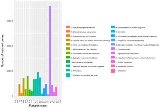 Novogene Metagenomic eggNOG Annotation