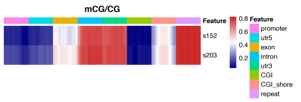 Novogene WGBS Heatmap Analysis for Methylation Levels of Gene Functional Region